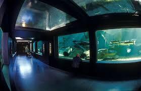 Aquarium de Touraine- Lussault sur Loire